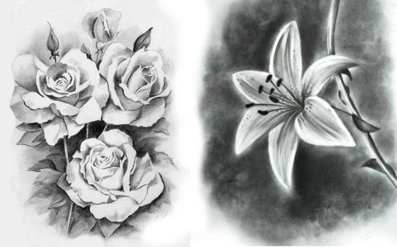 в цветы в карандаше рисунок тени